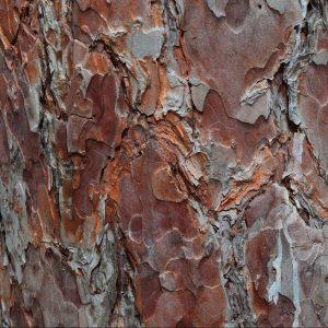 Filières locales bois